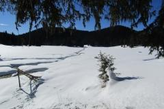 Баташки Снежник